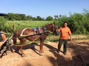 El Caballo (The Horse)